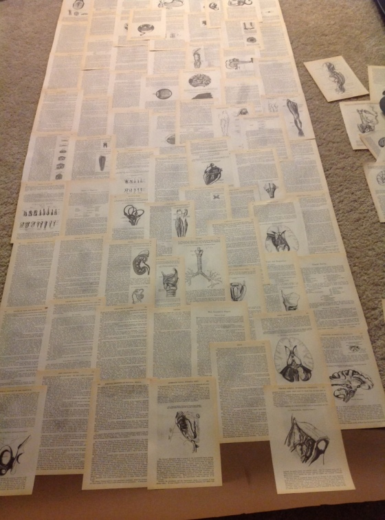 Floor to Ceiling Strip of Paper with pages from Gray's Anatomy